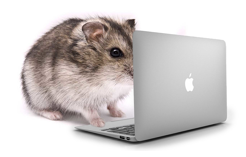 Hamster on laptop